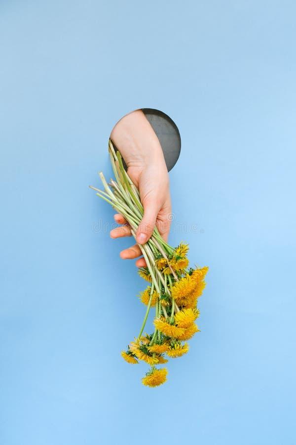 蓝色背景中的黄色蒲公英花 概念快乐夏天 明信片模板 图库摄影