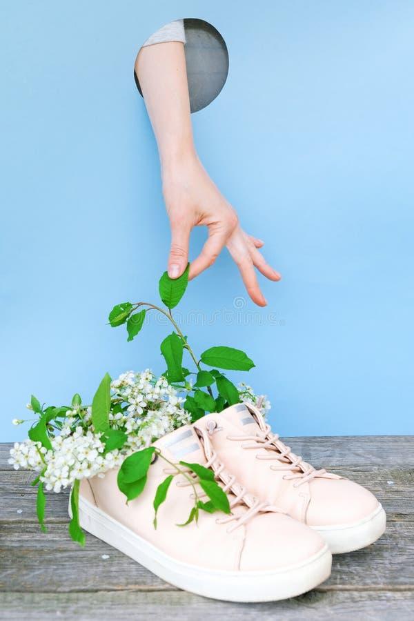 蓝色背景中粉色运动鞋樱花 免版税库存照片