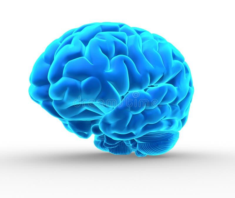蓝色脑子 库存例证