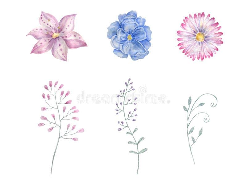 蓝色花卉花水彩图画例证几何例证绘画水彩花卉水彩画桃红色春天夏天 库存例证