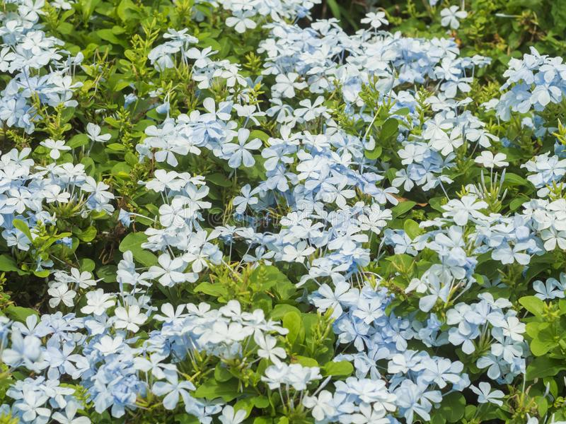 蓝色花园 库存照片