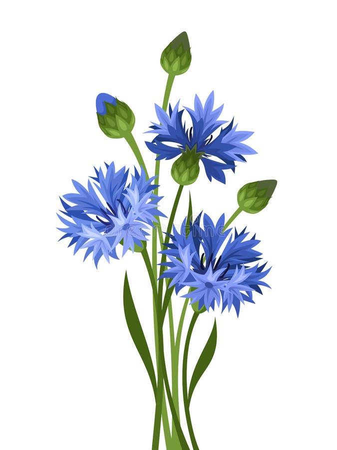 蓝色花束矢车菊 也corel凹道例证向量 库存例证