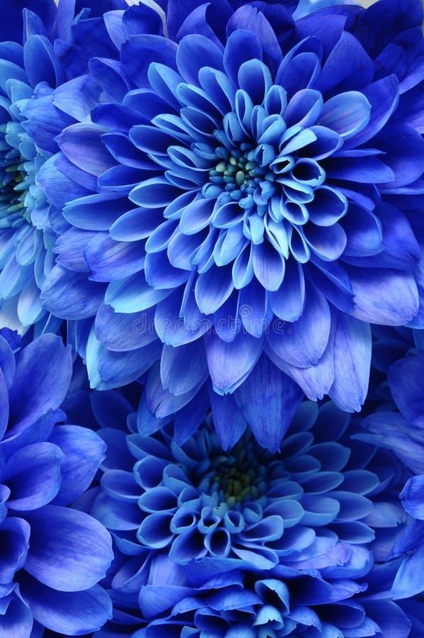 蓝色花细节背景或纹理的 库存图片