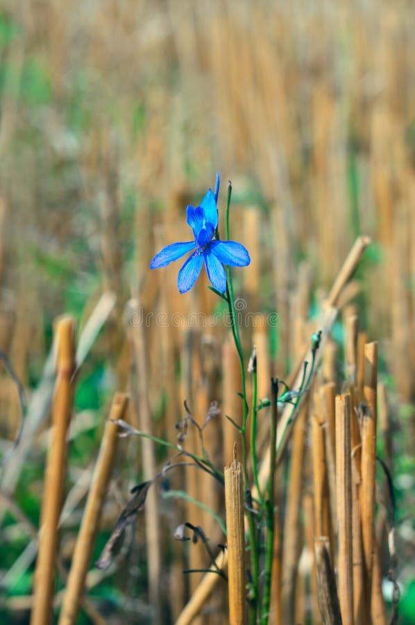 Download 蓝色花 库存图片. 图片 包括有 垂直, 秸杆, 本质, 增长, 剪切, 阳光, 蓝色, 背包徒步旅行者 - 15692679