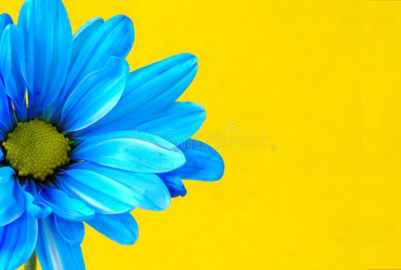 蓝色花 图库摄影
