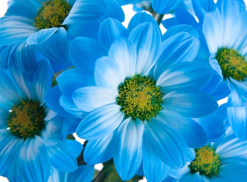 Download 蓝色花 库存照片. 图片 包括有 有机, 背包, 绿色, 蓝色, 精美, 绽放, beauvoir, 植物群 - 3673274