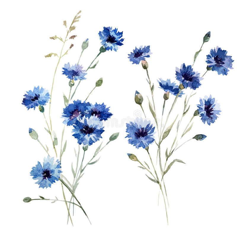 蓝色花8 皇族释放例证