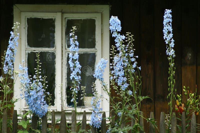 蓝色花 库存照片