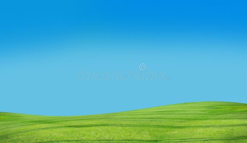 蓝色草天空 免版税库存照片