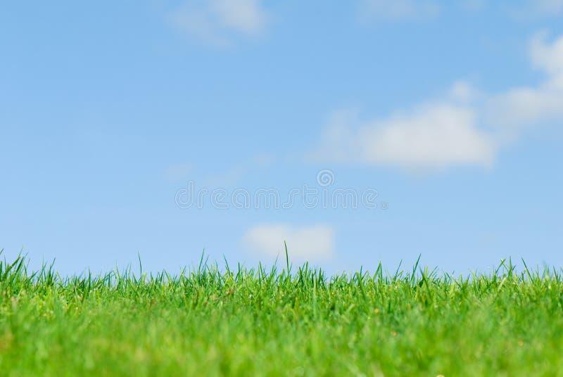 蓝色草绿色天空 库存图片
