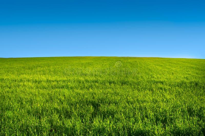 蓝色草绿色草甸r天空 免版税库存图片