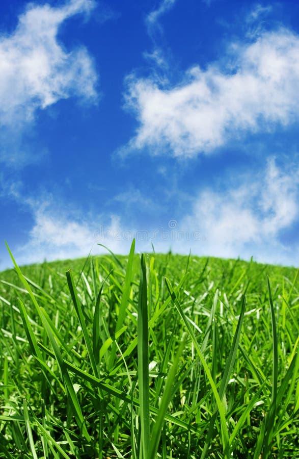 蓝色草绿色skys 库存图片