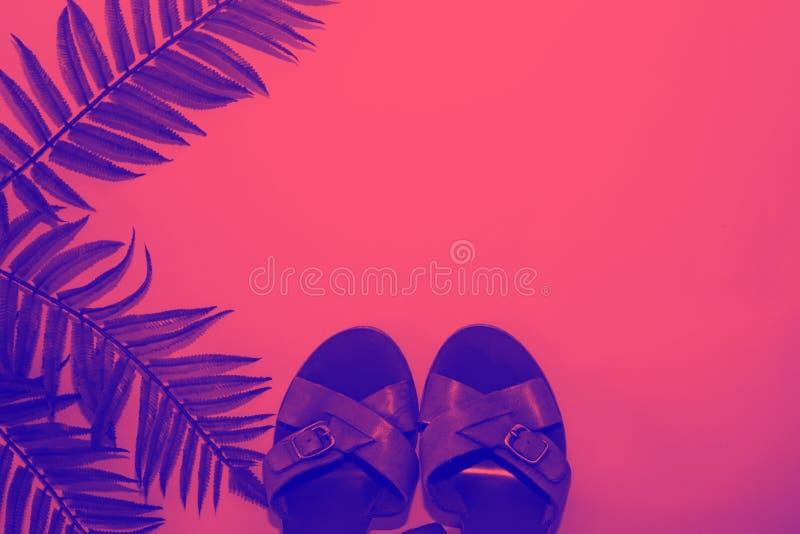 蓝色蕨异乎寻常的叶子和夏天鞋子反对桃红色背景,时髦霓虹定调子 库存图片