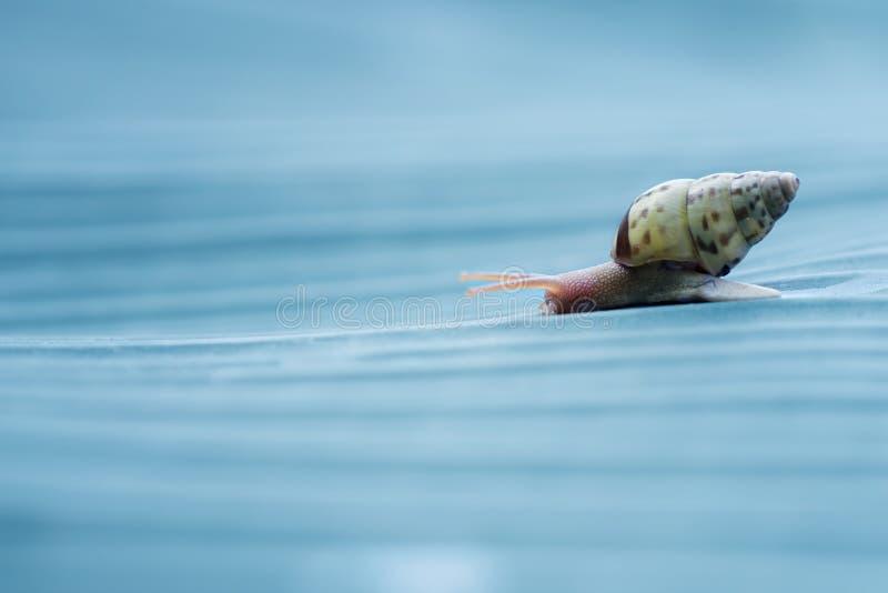 蓝色蜗牛 图库摄影