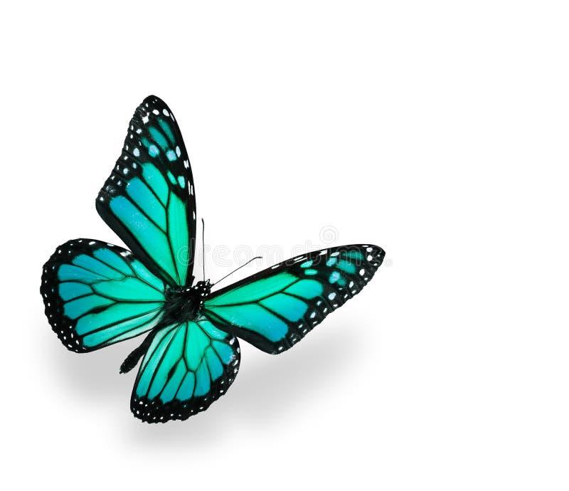 蓝色蝴蝶绿色查出的白色 库存照片