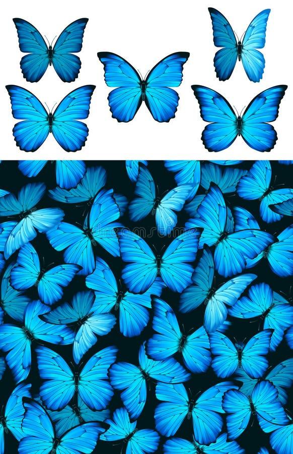 蓝色蝴蝶morphinae模式 皇族释放例证