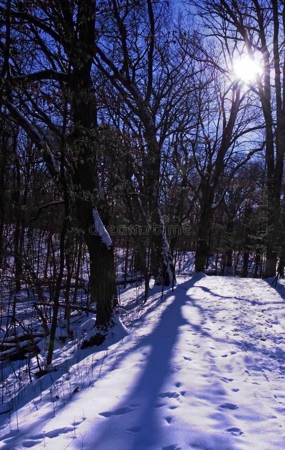 蓝色被点燃的线索冬天 免版税库存照片
