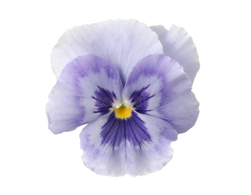 蓝色设计要素轻的蝴蝶花 库存图片