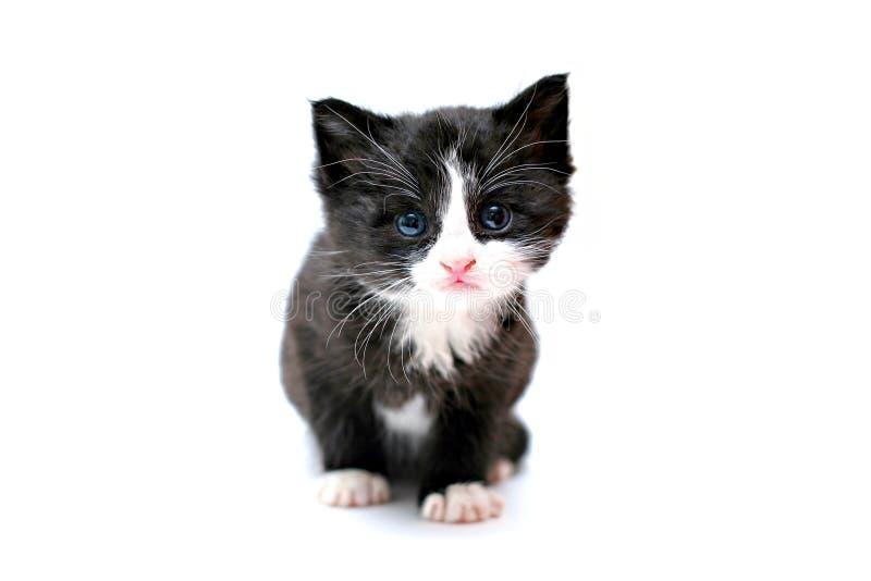 蓝色逗人喜爱的被注视的小猫 库存照片