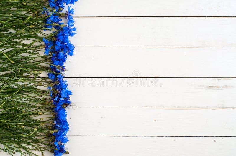 蓝色野花 库存图片