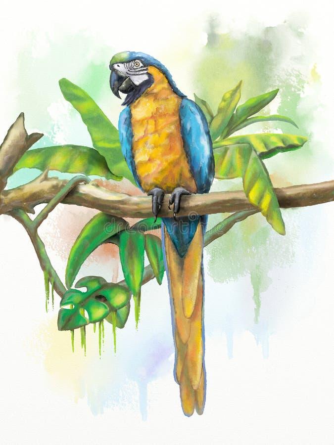 蓝色金金刚鹦鹉 皇族释放例证