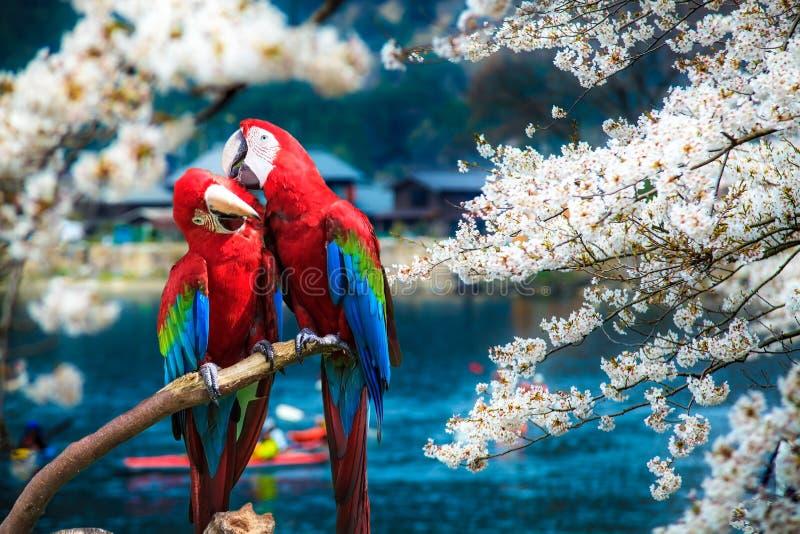 蓝色金金刚鹦鹉potrait 库存图片