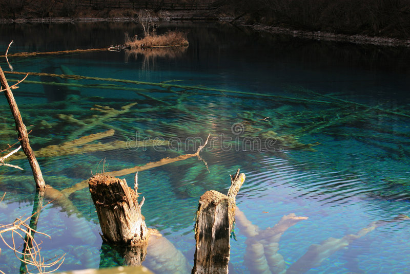蓝色钙化的湖结构树 免版税库存照片