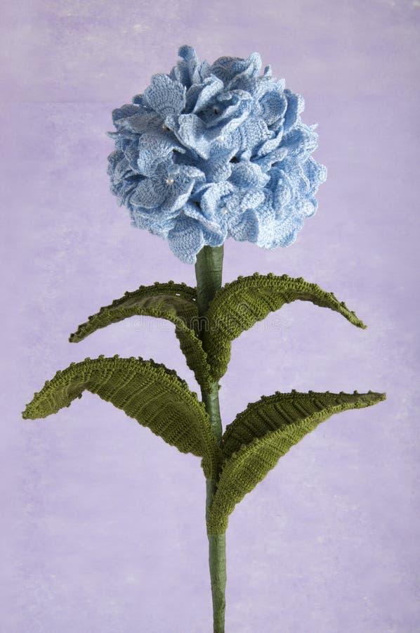蓝色钩针编织开花八仙花属 图库摄影