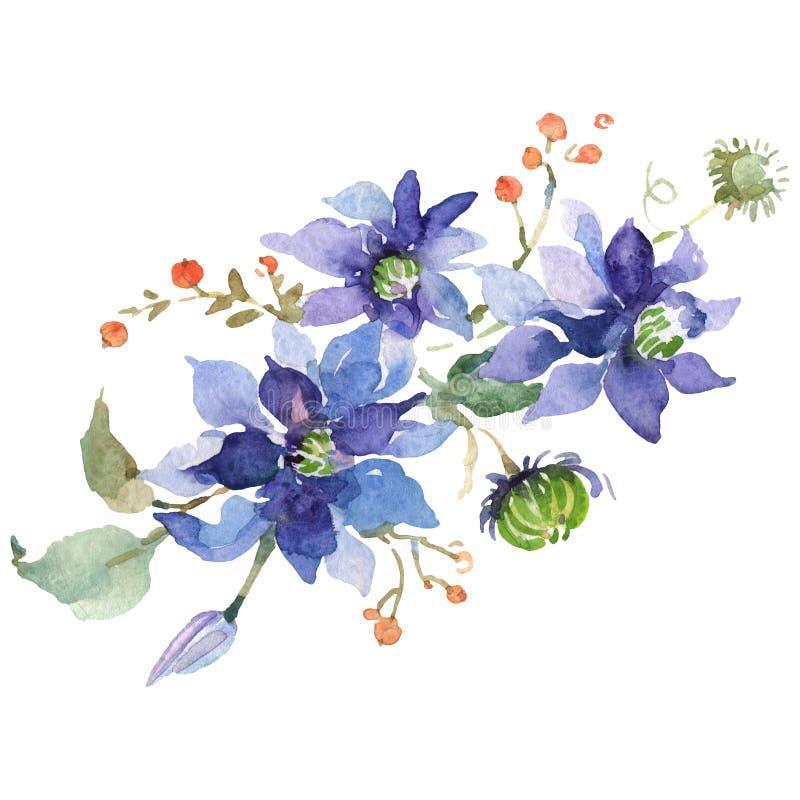 蓝色铁线莲属花束植物的花 r 被隔绝的铁线莲属例证元素 皇族释放例证