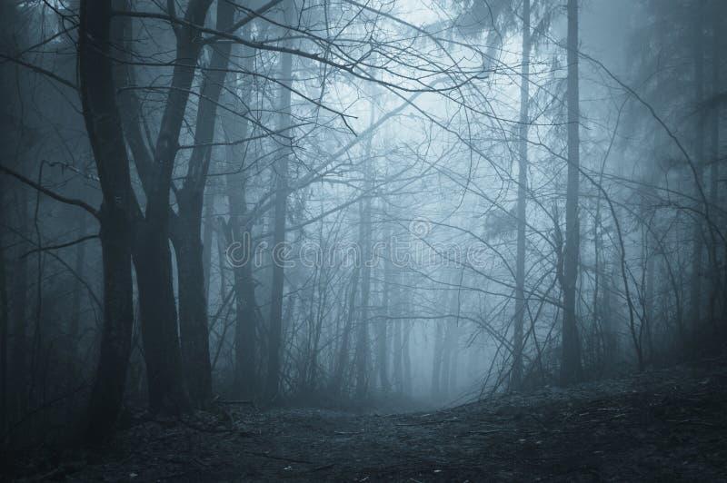 蓝色雾在有雾的一个黑暗的森林里在晚上图片