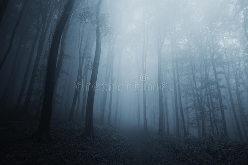 蓝色雾在黑暗的神奇森林里在万圣夜图片