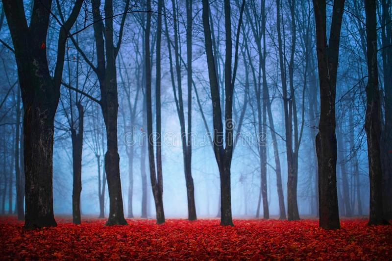 蓝色雾的美丽的神秘的森林在秋天 与被迷惑的树的五颜六色的风景与红色叶子 免版税图库摄影