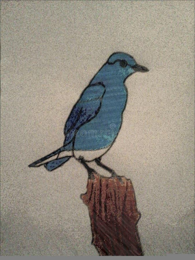 蓝色鸟 库存图片