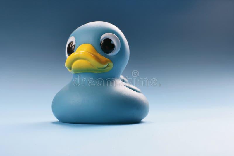 蓝色鸭子 库存照片