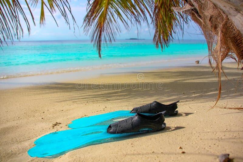 蓝色鸭脚板在一个热带海岛的岸说谎有白色沙子的,印度洋,马尔代夫 免版税库存照片