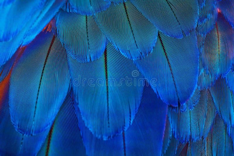 蓝色鹦鹉用羽毛装饰样式作为织地不很细背景 库存图片