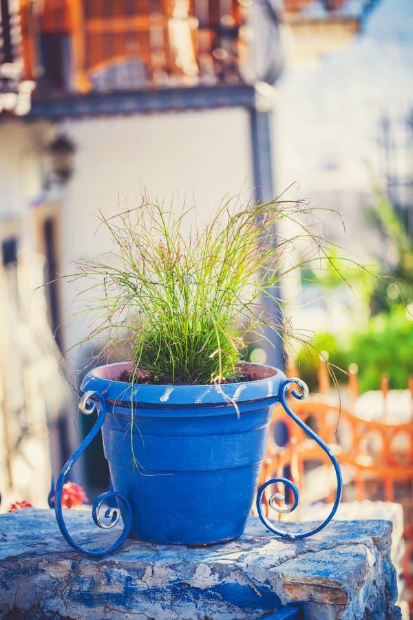 蓝色给上釉的赤土陶器植物罐充满 免版税库存图片