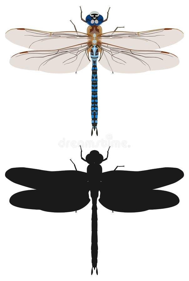 蓝色蜻蜓和它的剪影,顶视图 也corel凹道例证向量 向量例证