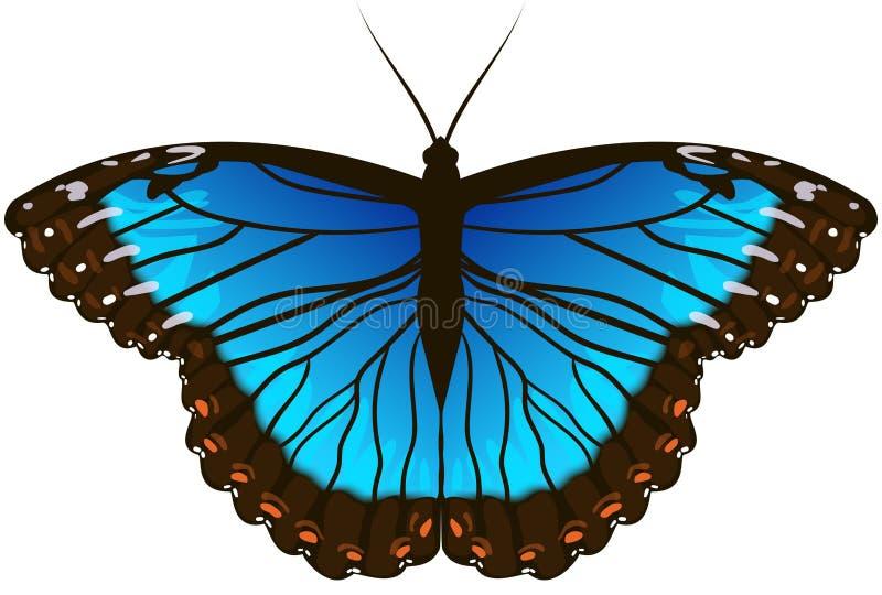 蓝色蝴蝶morpho 皇族释放例证