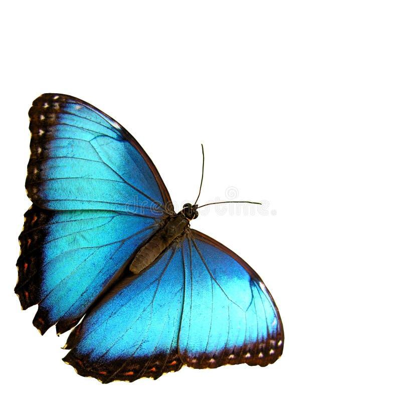蓝色 免版税库存图片