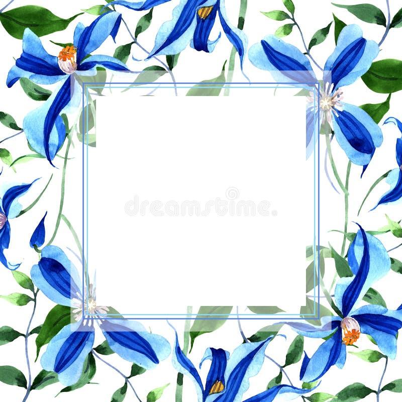 蓝色durandii铁线莲属 花卉植物的花 框架边界装饰品正方形 皇族释放例证