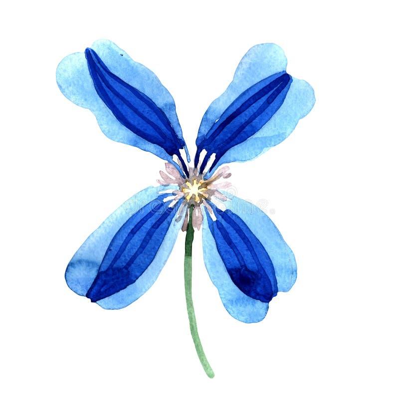 蓝色durandii铁线莲属 花卉植物的花 被隔绝的野生春天叶子野花 向量例证
