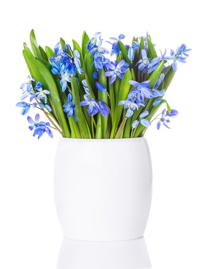 蓝色snowdrops,第一朵春天花 免版税库存图片
