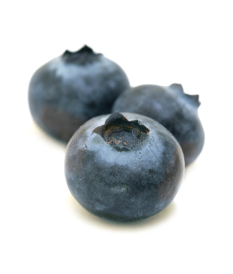 蓝莓三重奏 库存照片