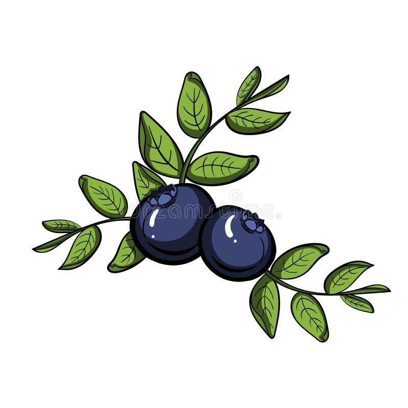 蓝莓传染媒介 库存例证
