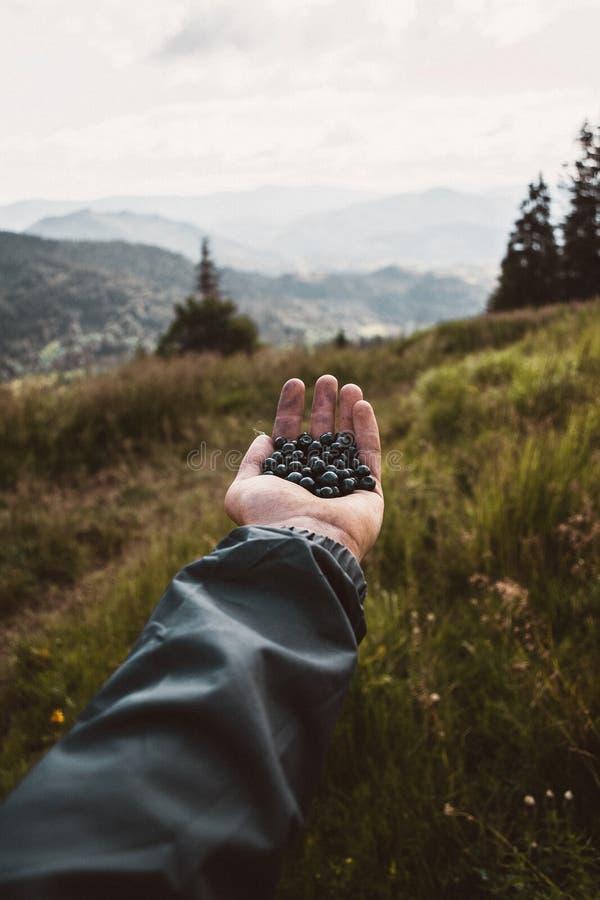 蓝莓在有山的手上在背景 免版税图库摄影