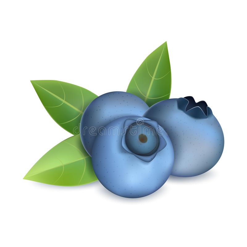 蓝莓堆象,现实样式 皇族释放例证