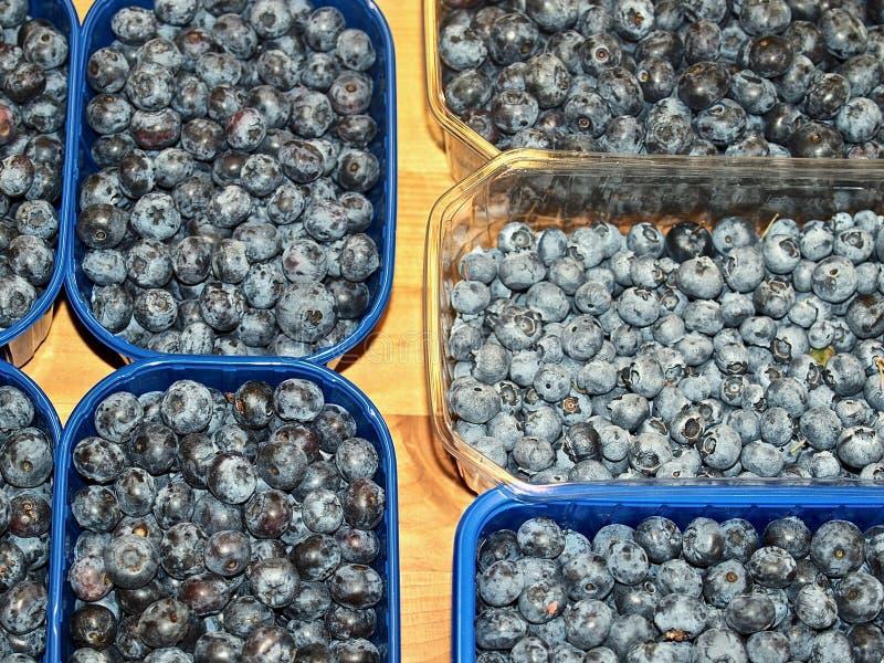 蓝莓宏指令在碗的 免版税库存照片