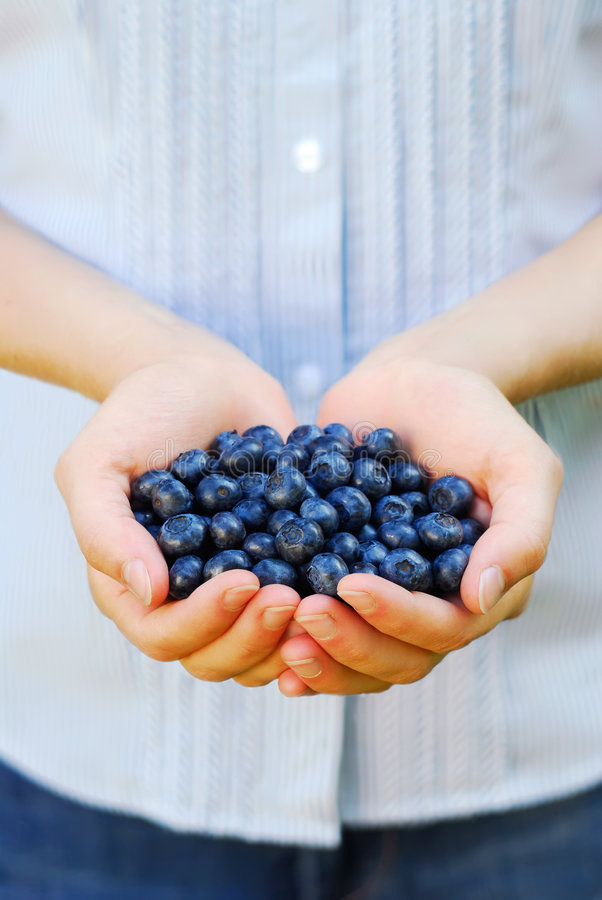 蓝莓极少数 免版税库存图片