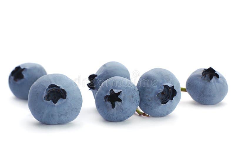 蓝莓果子 免版税库存照片